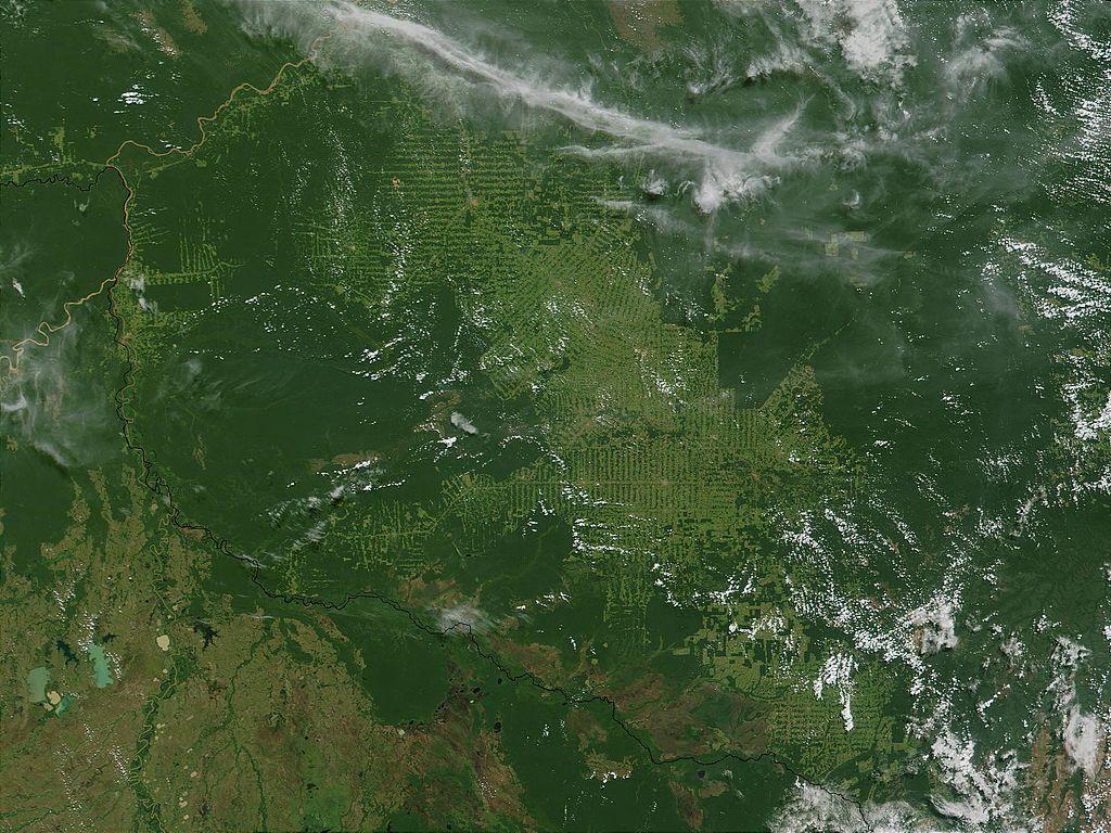 skogsskovling-brasilien
