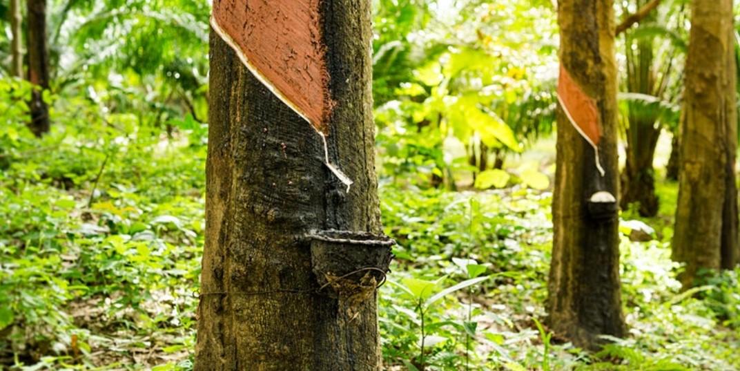 Liberia_rubber_webinar_web_pic
